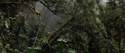 ESA_Jungle_Survivor_course